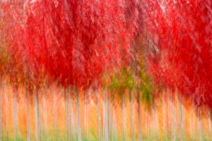 Website_Tree Nursery in Fall.jpg